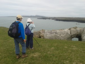 Wildlife Walk, White Arch, Rhoscolyn