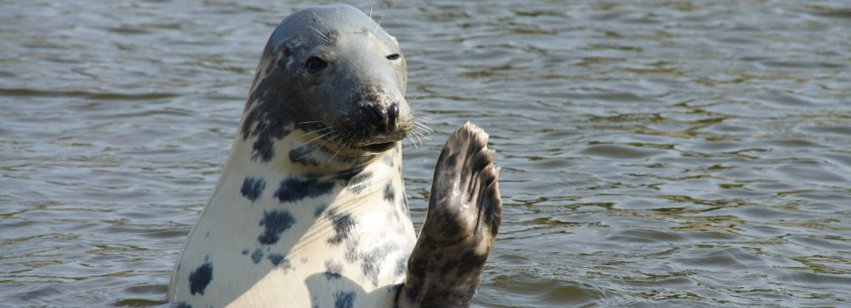 Anglesey Wildlife Walks