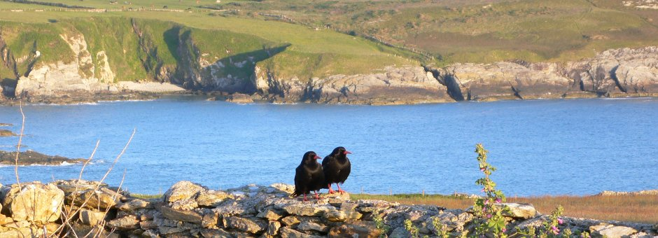 Isle Of Anglesey Wildlife Tour